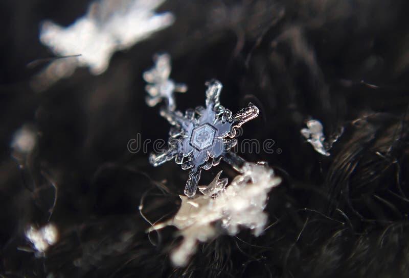 Inverno Fiocchi di neve - bello ghiaccio del pizzo fotografie stock