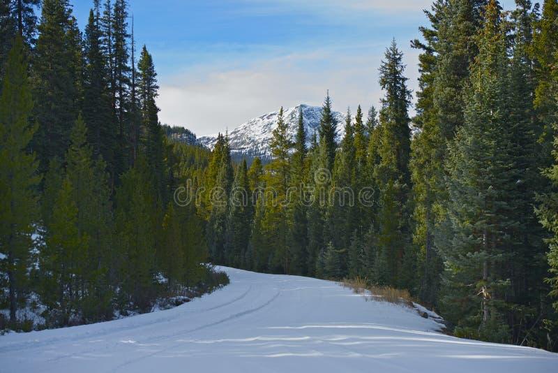 Inverno Forest Road fotografie stock