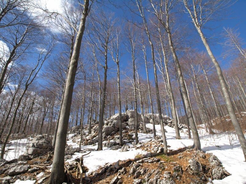 Inverno in foresta fotografia stock