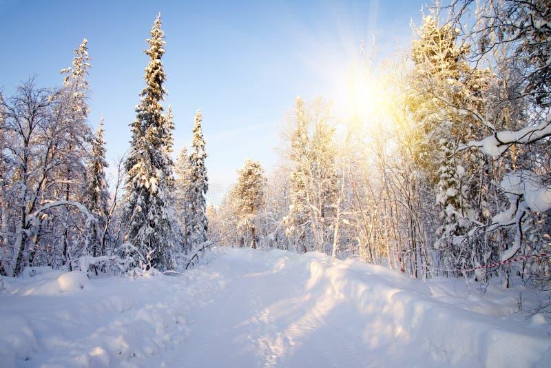 Inverno in foresta profonda. fotografia stock libera da diritti