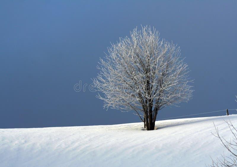 Inverno freddo fotografie stock libere da diritti