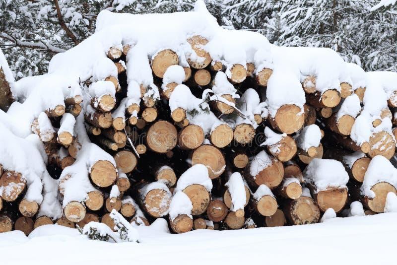 inverno, freddo, nevicante Foresta segata per elaborare Impilato in un mucchio la neve è versata fotografia stock