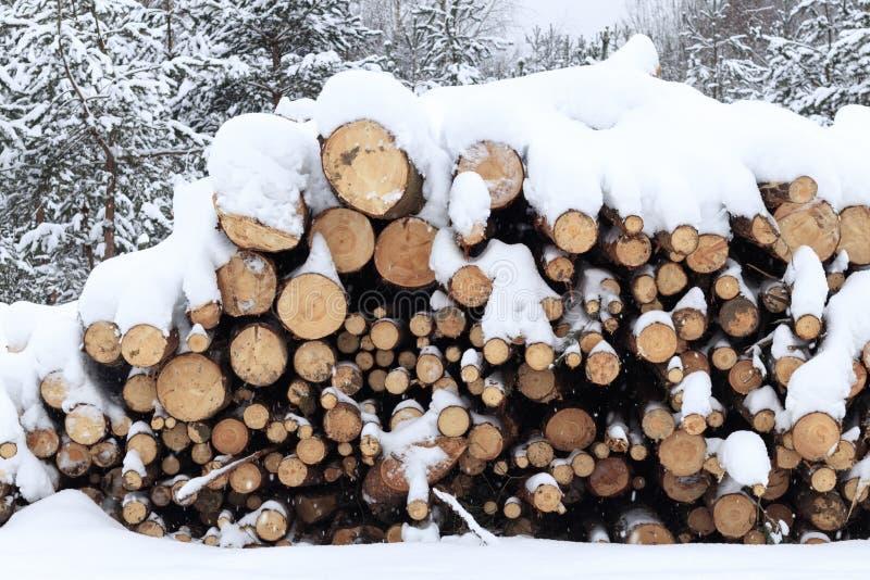 inverno, freddo, nevicante Foresta segata per elaborare Impilato in un mucchio la neve è versata fotografia stock libera da diritti