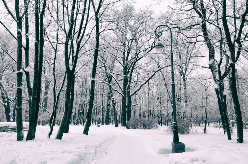 inverno frio nas madeiras fotografia de stock royalty free