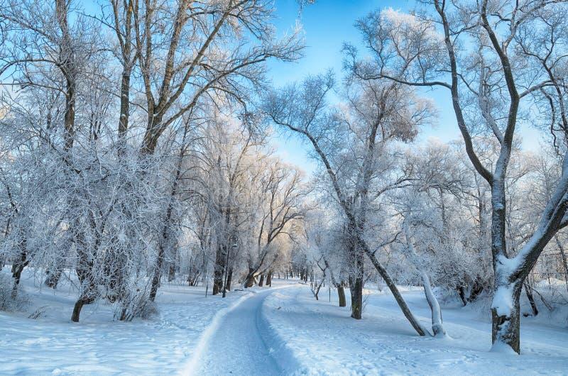inverno frio nas madeiras imagens de stock royalty free