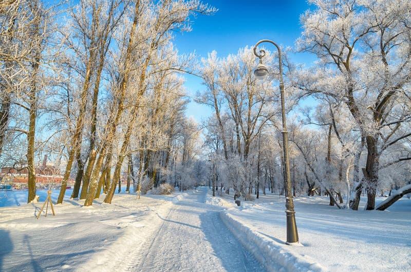 inverno frio nas madeiras fotografia de stock