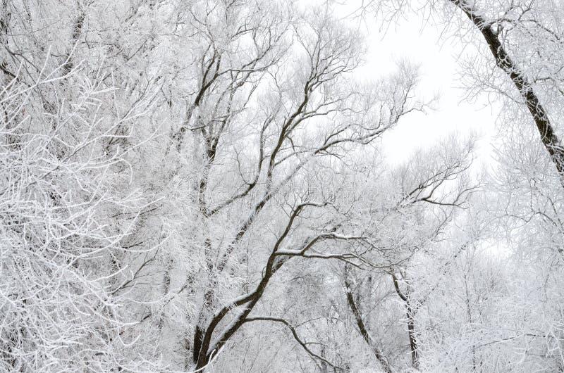 inverno frio nas madeiras foto de stock royalty free