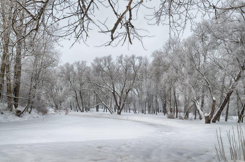 inverno frio nas madeiras fotos de stock royalty free