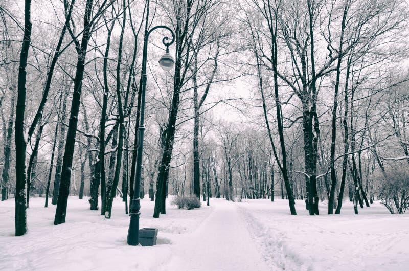 inverno frio nas madeiras imagem de stock royalty free