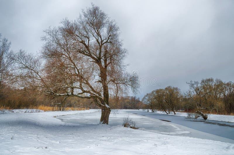 inverno frio nas madeiras imagem de stock