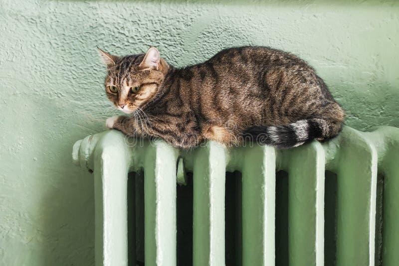Inverno frio Problemas com aquecimento Aquecimento do gato na bateria Gato de gato malhado que relaxa em um radiador morno O gato imagens de stock royalty free
