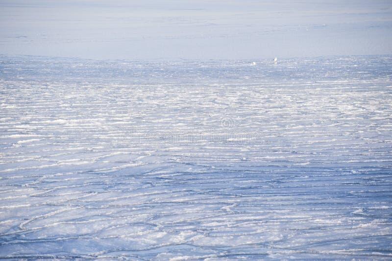 Download Inverno gelado foto de stock. Imagem de fevereiro, inverno - 12803408