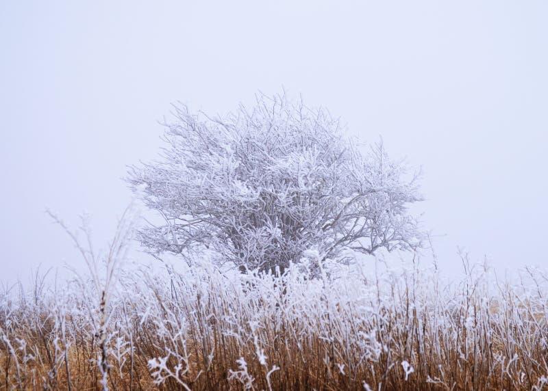 Inverno gelado foto de stock