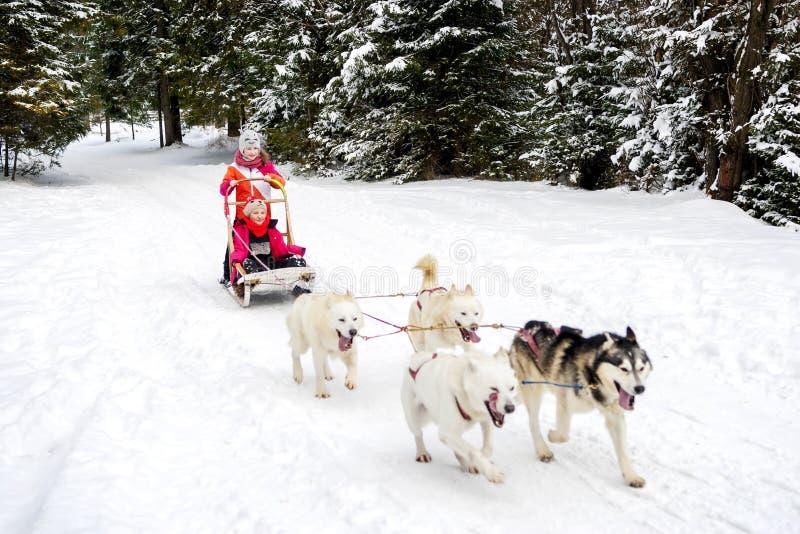Inverno Husky Team delle ragazze fotografia stock libera da diritti