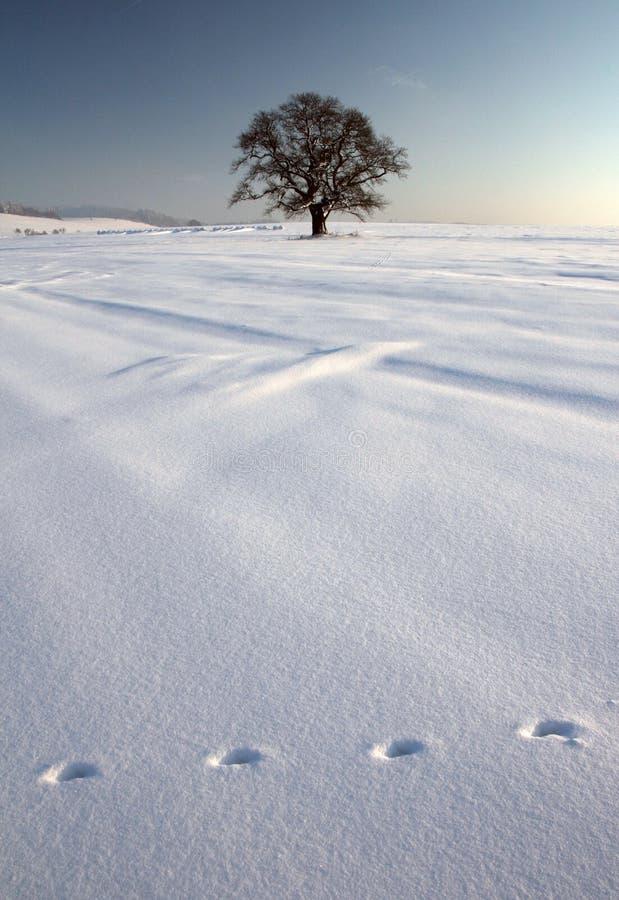 Inverno I immagini stock libere da diritti