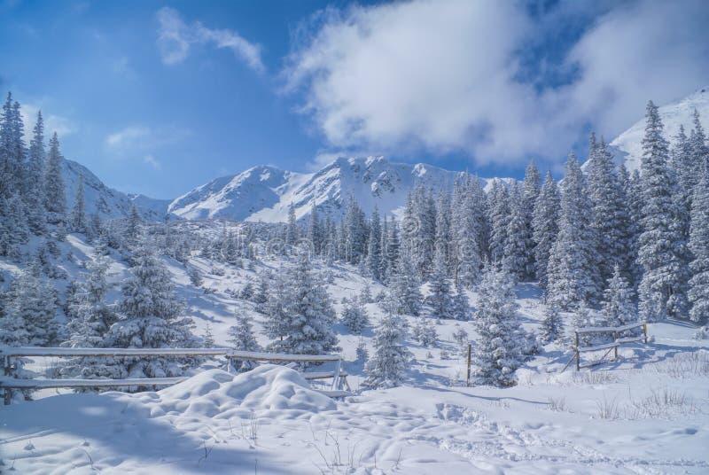 Inverno idílico imagem de stock