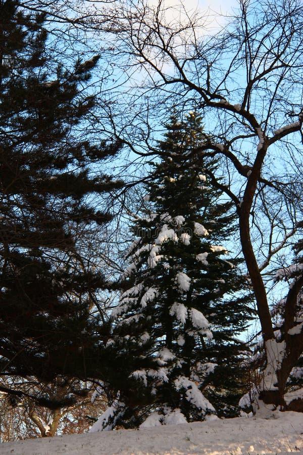 Inverno justo fotos de stock royalty free
