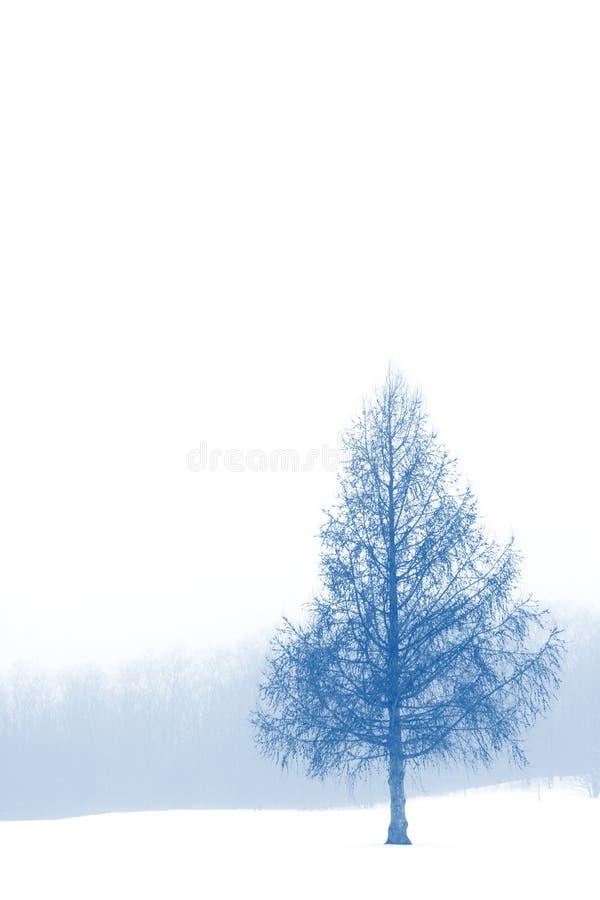 Inverno Lanscape fotografia stock libera da diritti