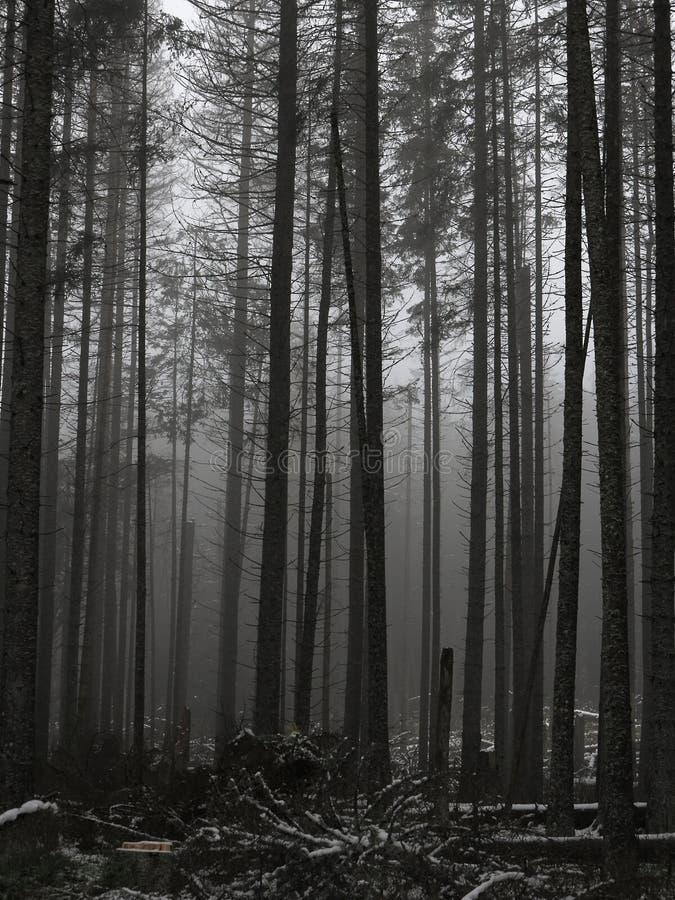 Inverno lunatico Forest Suppressed Colors Mattina nebbiosa immagine stock libera da diritti