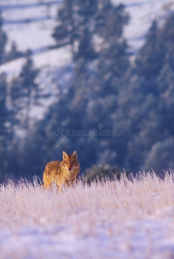 Inverno lungo fotografia stock libera da diritti