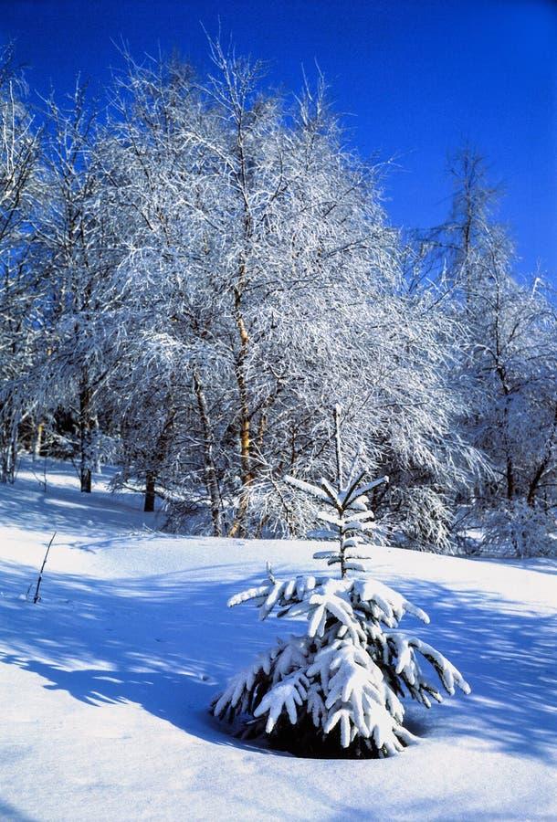Inverno magico di ogni giorno fotografie stock libere da diritti