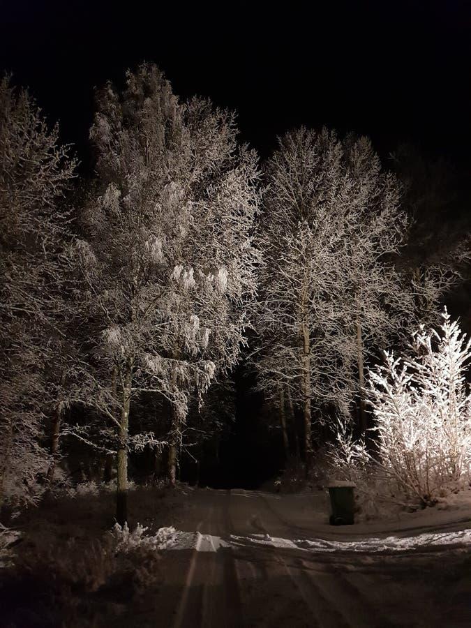 inverno misterioso fotos de stock royalty free