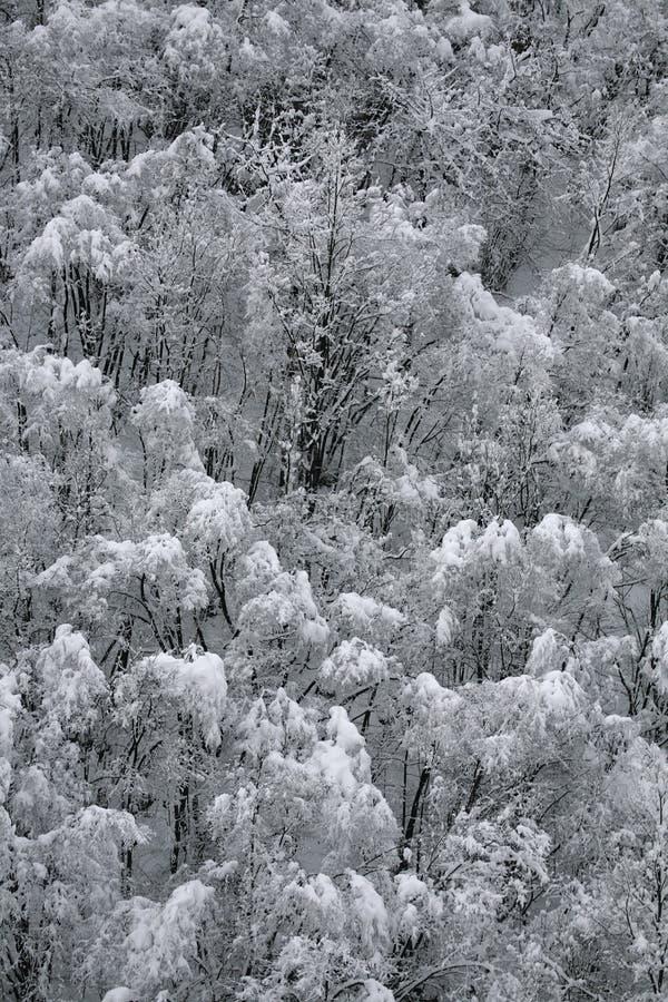 Inverno na floresta fotos de stock
