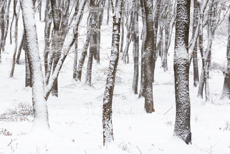 inverno na floresta com as árvores cobertas da neve, estação abstrata do xmas da paisagem fotografia de stock