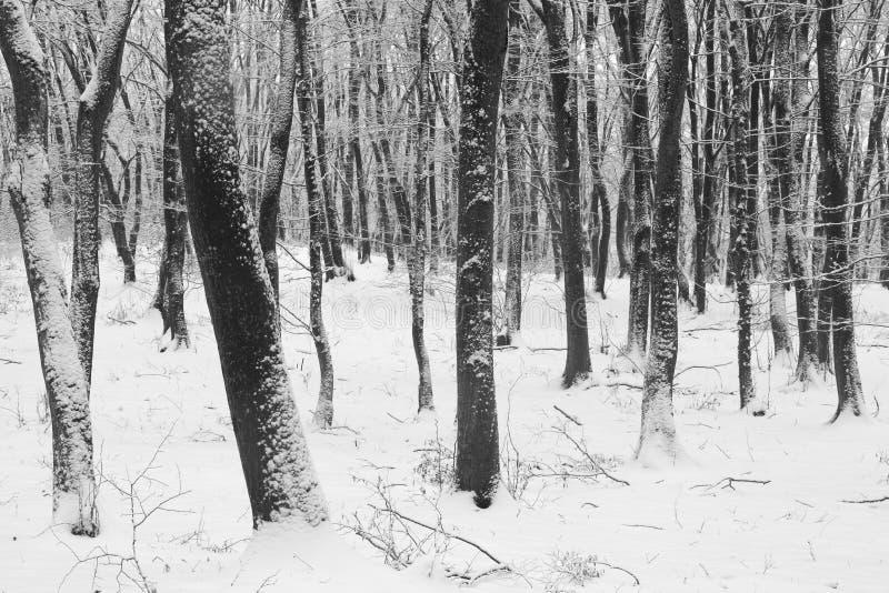 inverno na floresta com as árvores cobertas da neve, estação abstrata do xmas da paisagem foto de stock royalty free