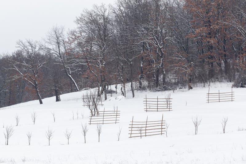 inverno na floresta com as árvores cobertas da neve, estação abstrata do xmas da paisagem imagens de stock royalty free