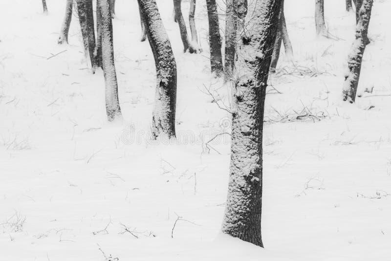 inverno na floresta com as árvores cobertas da neve, estação abstrata do xmas da paisagem imagem de stock royalty free
