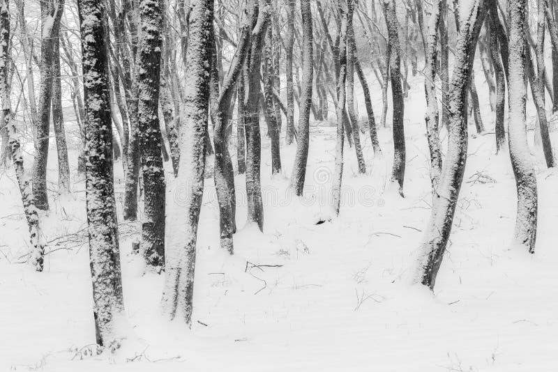 inverno na floresta com as árvores cobertas da neve, estação abstrata do xmas da paisagem fotografia de stock royalty free