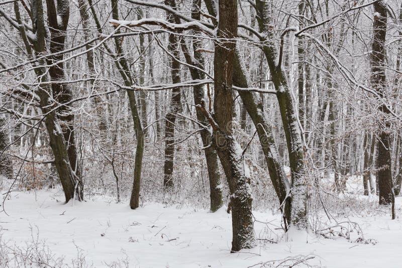 inverno na floresta com as árvores cobertas da neve, estação abstrata do xmas da paisagem imagem de stock