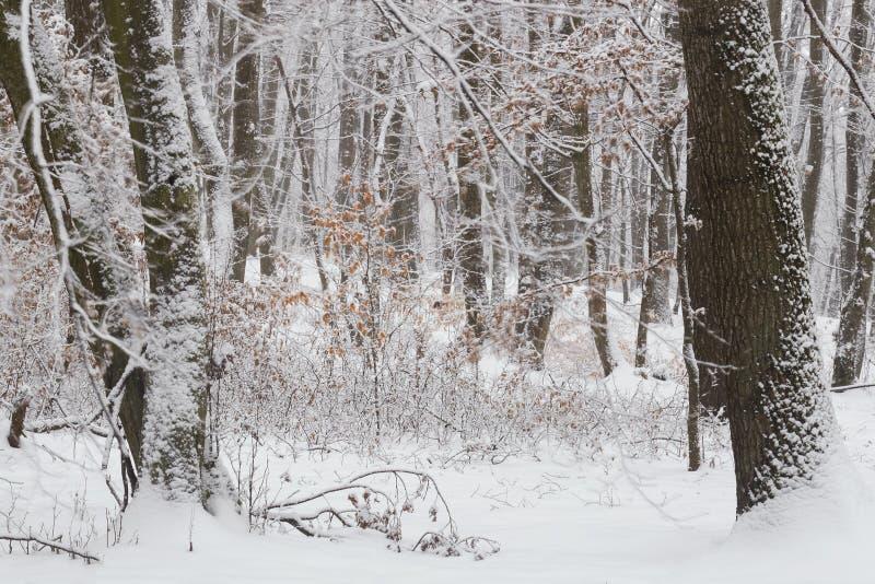 inverno na floresta com as árvores cobertas da neve, estação abstrata do xmas da paisagem imagens de stock