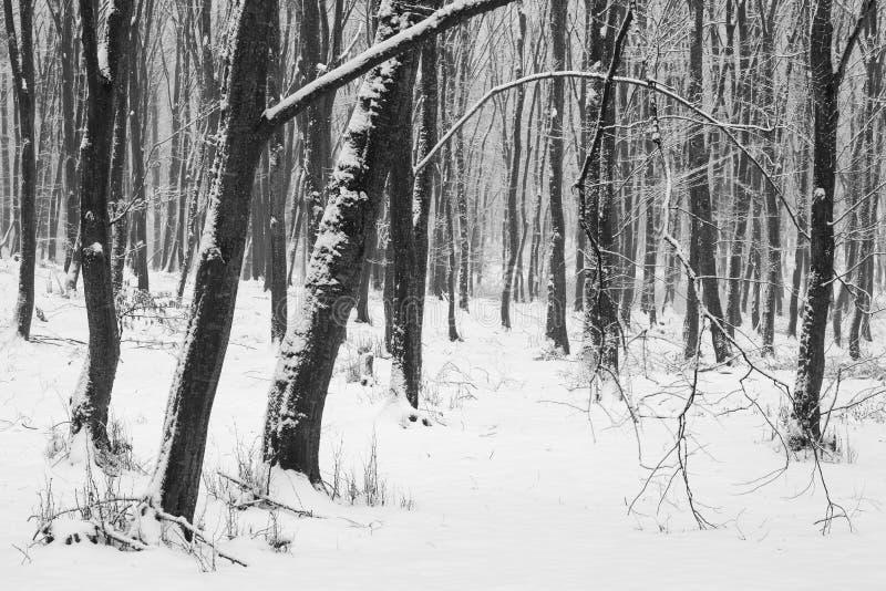 inverno na floresta com as árvores cobertas da neve, estação abstrata do xmas da paisagem foto de stock