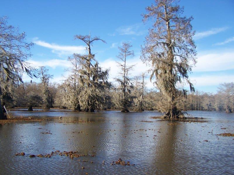 Inverno nel ramo paludoso di fiume della Luisiana fotografie stock libere da diritti