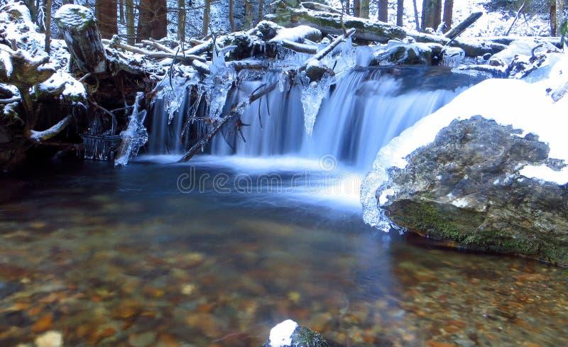 Inverno nella foresta fotografia stock