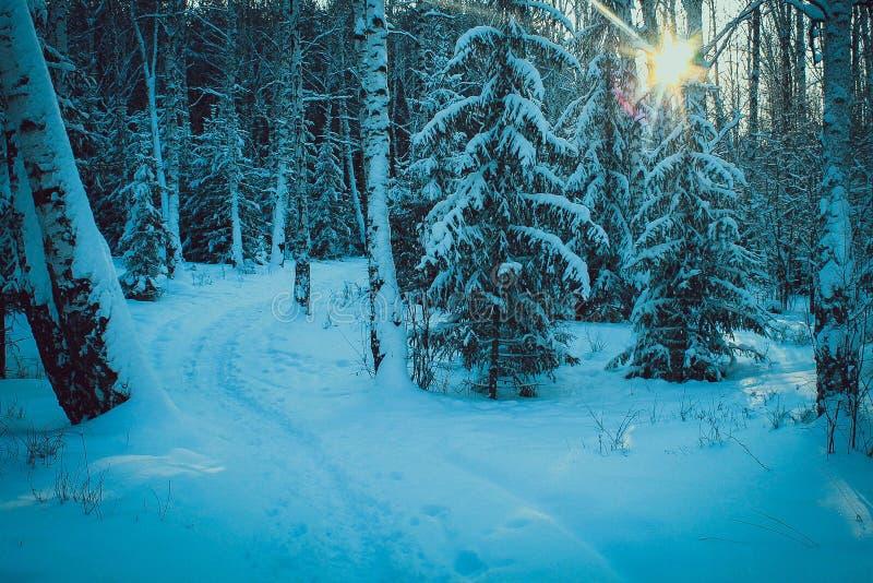 Inverno nella foresta fotografie stock libere da diritti