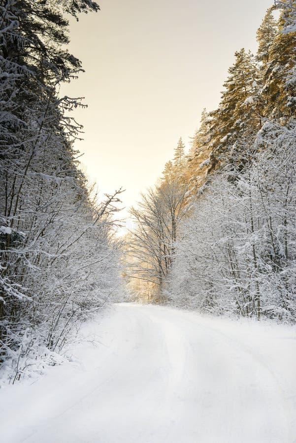 Inverno nella foresta del thw immagini stock
