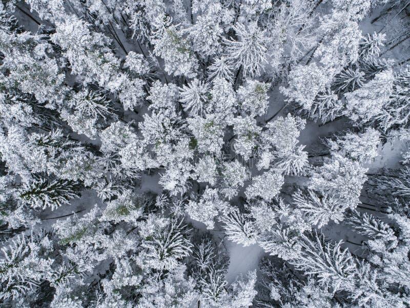 Inverno nella foresta - foto del fuco degli alberi gelidi fotografie stock