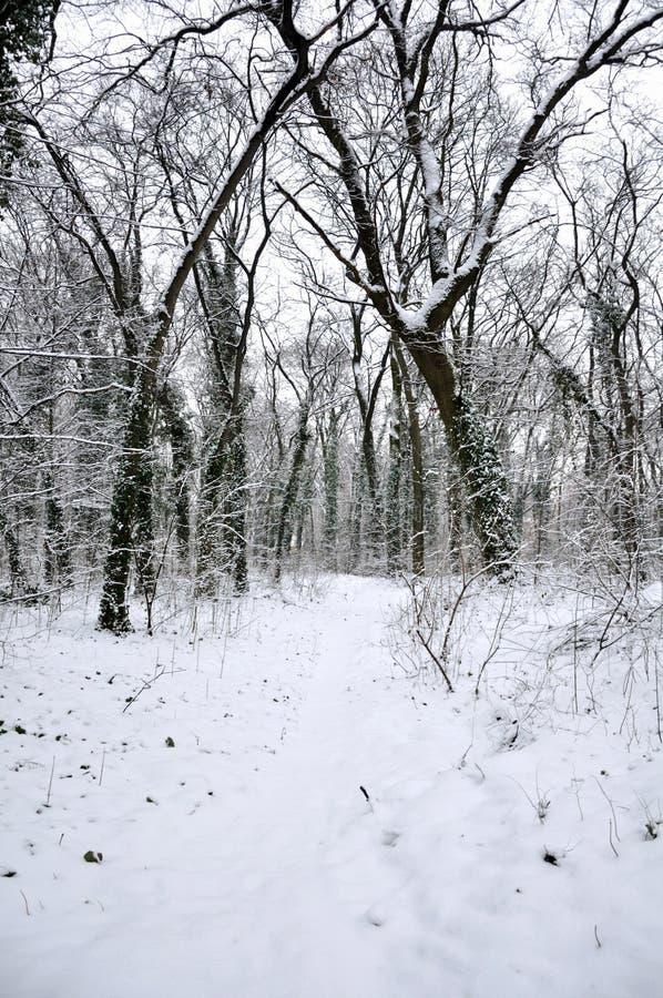 Inverno nella natura immagini stock libere da diritti