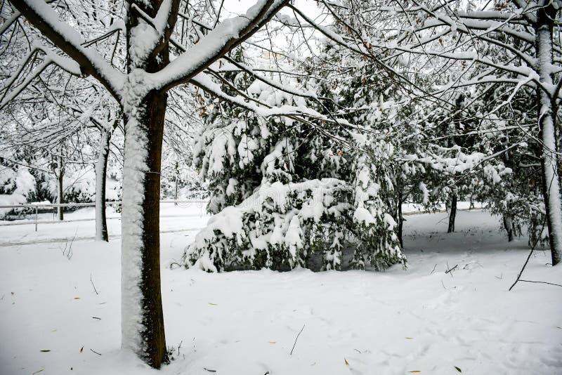Inverno nevado fotos de stock