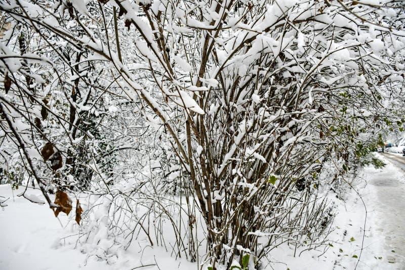 Inverno nevado imagem de stock
