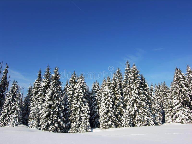 Inverno nevado imagens de stock