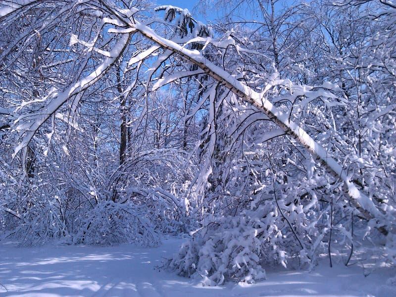 Inverno nevado na floresta foto de stock