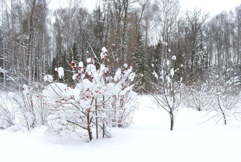 Inverno, neve, albero, paesaggio, freddo, foresta, natura, bianco, cielo, gelo, alberi, blu, scena, ghiaccio, congelato, stagione fotografia stock libera da diritti