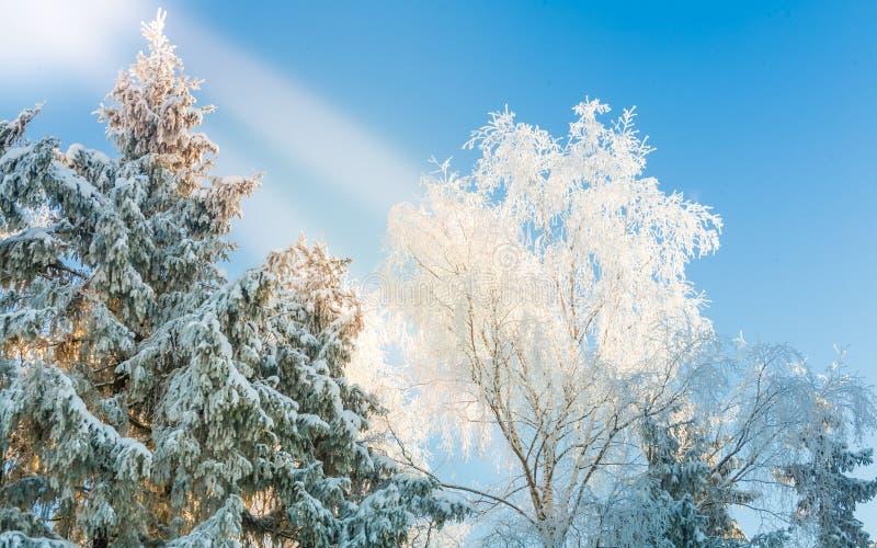 inverno, neve, luz dura, árvores contra o céu azul foto de stock royalty free