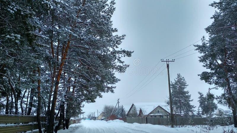 Inverno, neve, pino, villaggio, freddo, zmiev fotografia stock libera da diritti