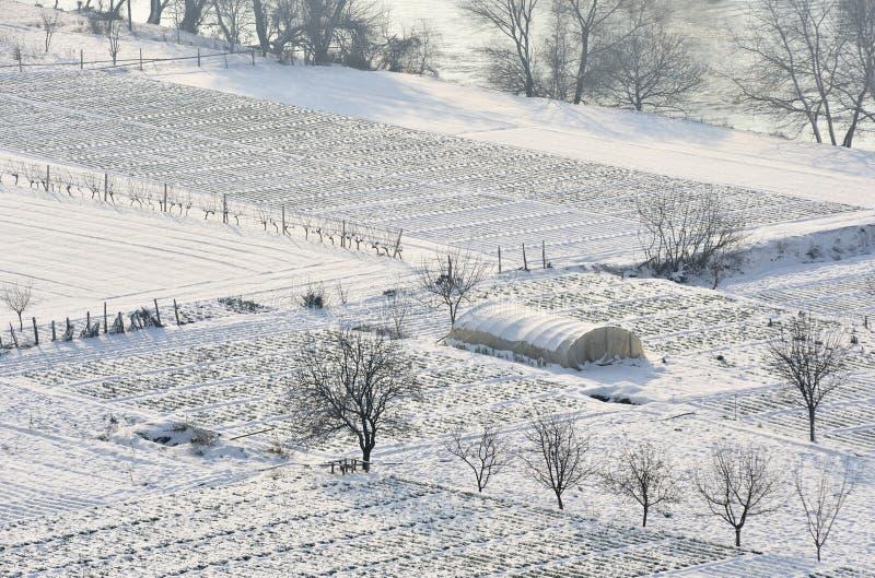 Inverno no campo foto de stock royalty free