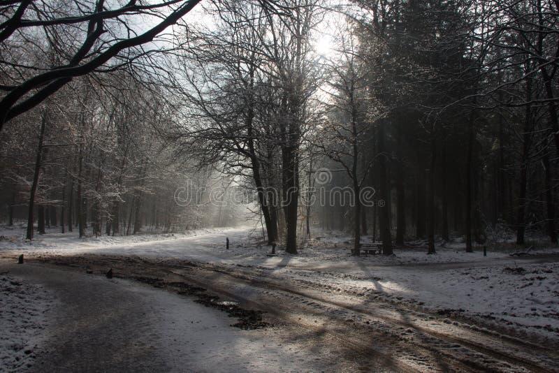 Inverno no mais forrest fotos de stock royalty free